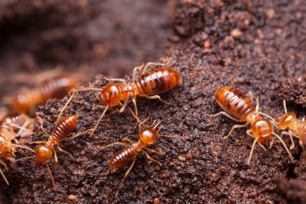 & 2019 Termite Treatment Cost | Average Cost of Tenting u0026 Control
