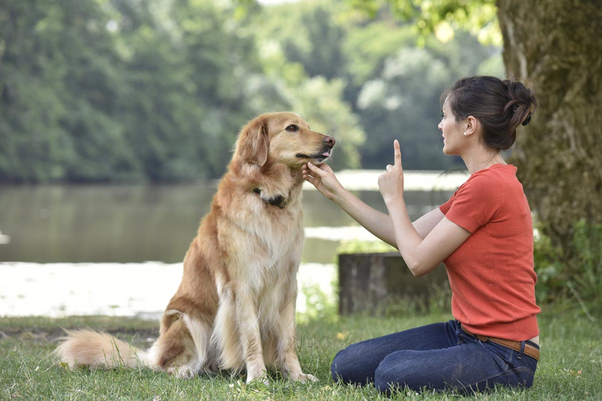 2019 Dog Training Costs | Obedience Classes & Service Dog Prices