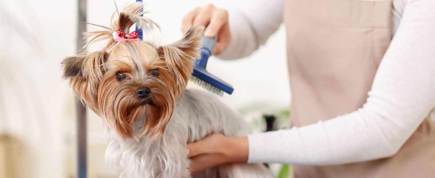 Grooming Small Dogs Face