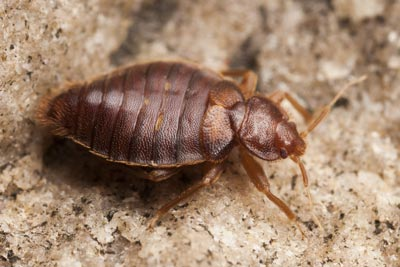 The 10 Best Pest Control Companies Near Me With Free Quotes