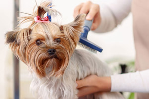 Dog Grooming Prices