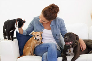 2019 Pet Sitting Rates Prices Per Day Or Overnight Dogs