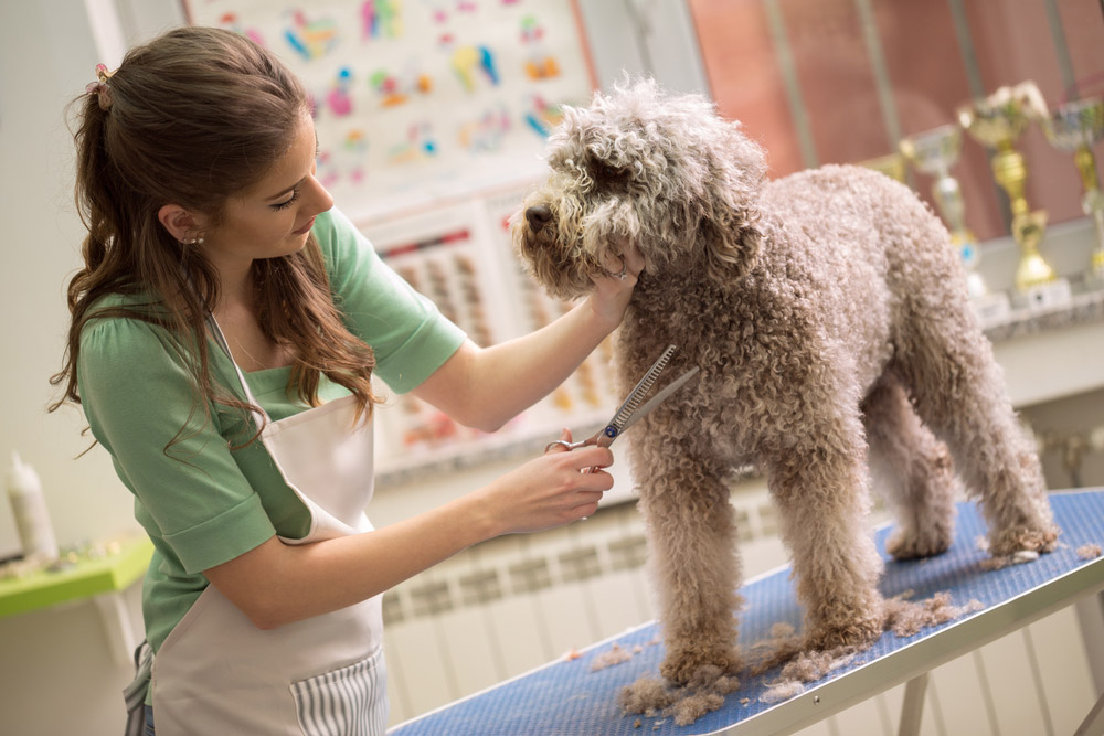 2020 Dog Grooming Prices List Costs By Breed Weight