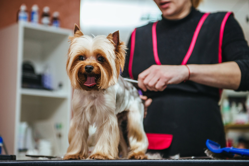 2019 Dog Grooming Prices List | Costs By Breed & Weight