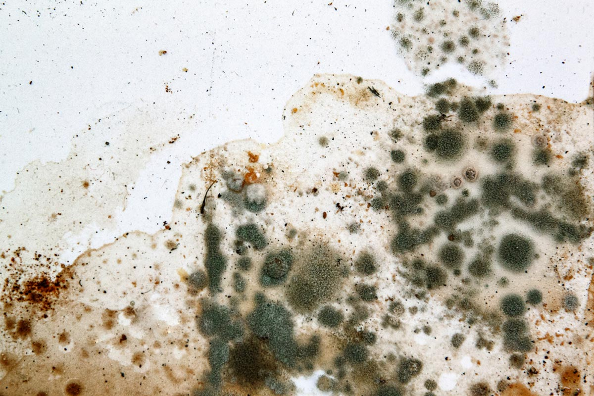 2021 Mold Removal Cost | Mold Remediation Cost Per Square Foot