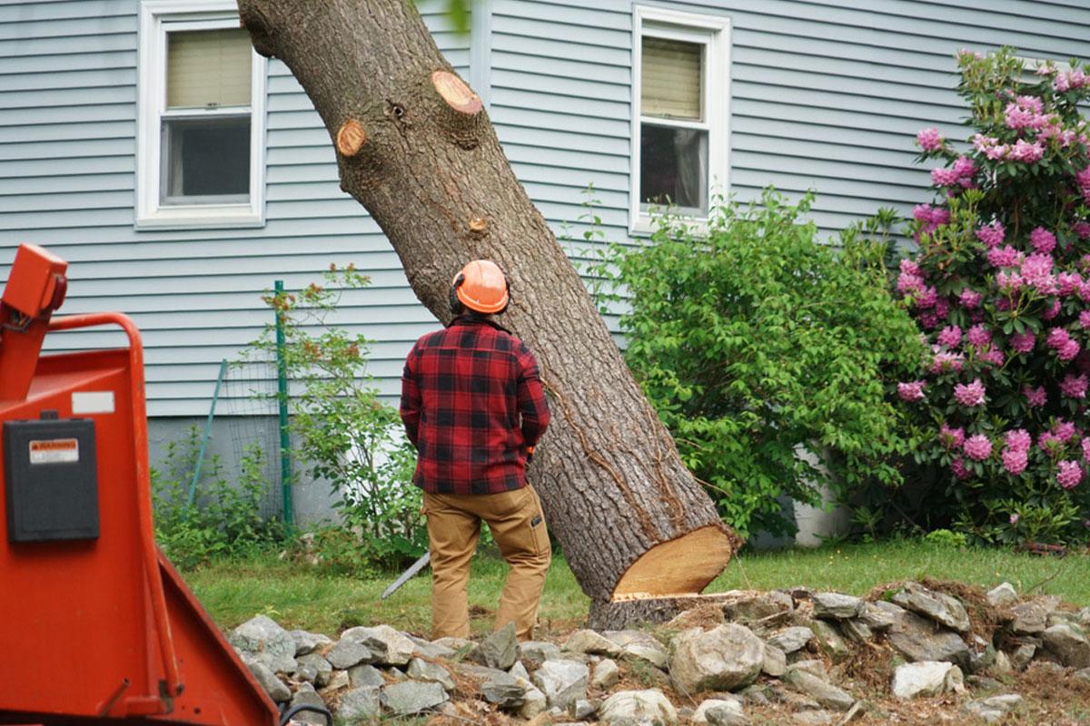 Tree Service Matthews Nc