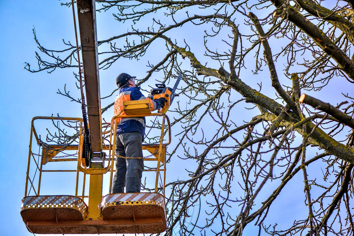 2020 Tree Trimming Costs & Prices | Tree Pruning Cost ...