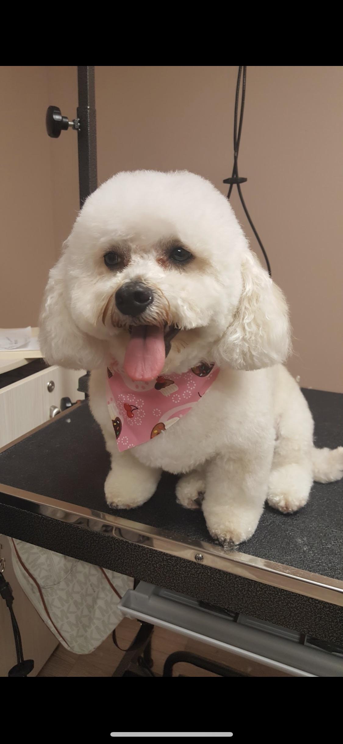 Doggie Stylez Pet Salon In Johns Creek, Ga  Homeguide-8848