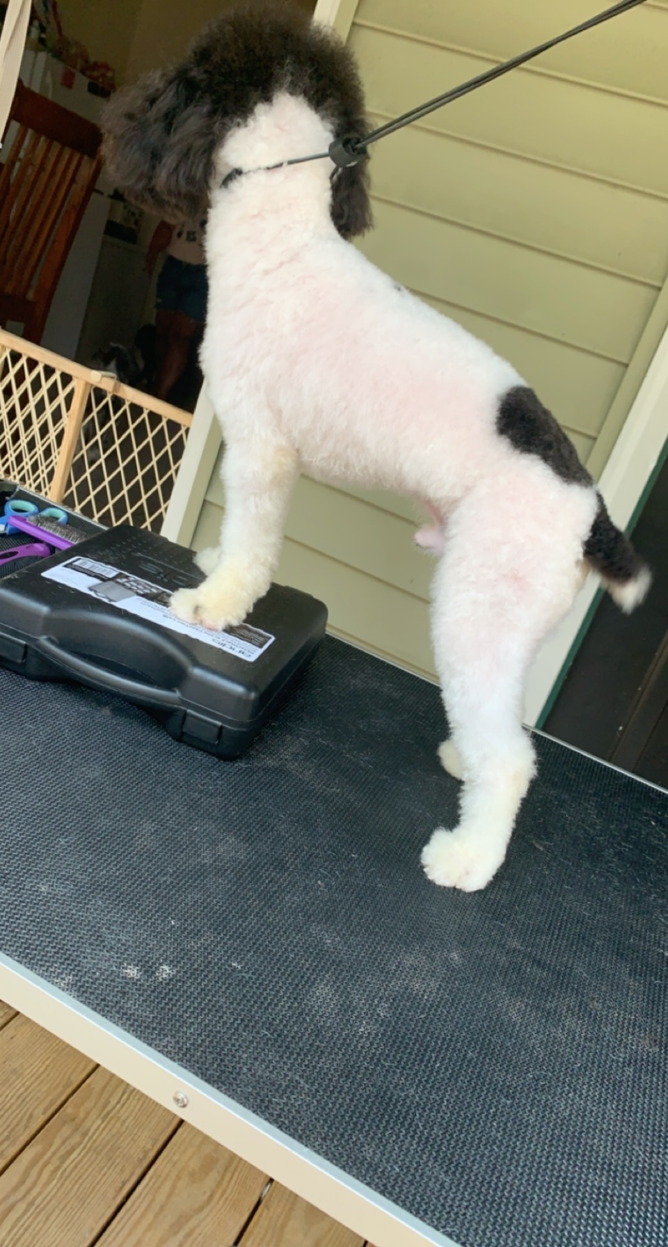 Suzies Pet Spa in Fort Lee, NJ // HomeGuide