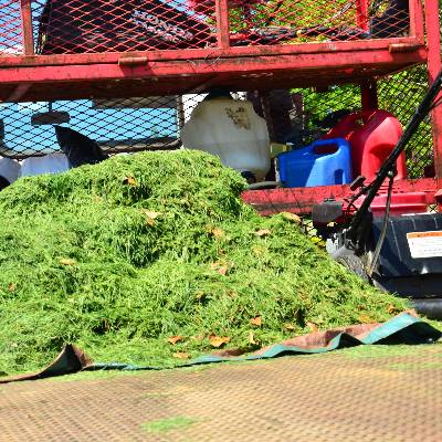 Pro cut lawn service in little rock ar homeguide for Professional garden maintenance