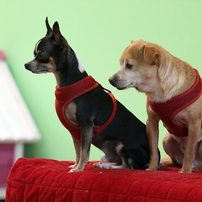 The 10 best dog groomers near me with prices reviews under one woof solutioingenieria Image collections