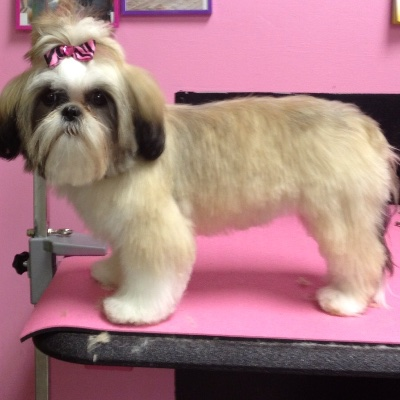 The 10 Best Dog Groomers In Lee S Summit Mo With Free Quotes