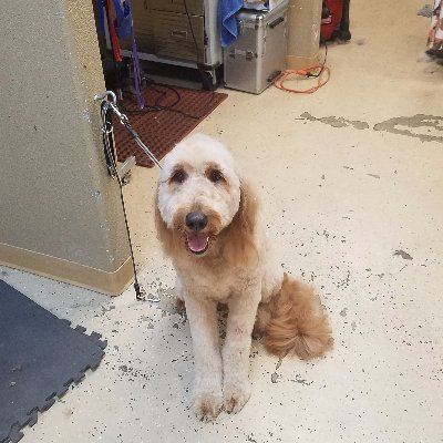 The 10 best dog groomers near me with prices reviews shaggy to chic pet salon solutioingenieria Image collections