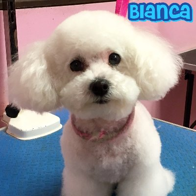 The 10 best dog groomers in los angeles ca with free quotes pink pucci dog grooming solutioingenieria Gallery