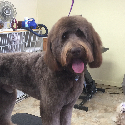 The 10 best dog groomers in escondido ca with free quotes priscillas dog grooming solutioingenieria Gallery