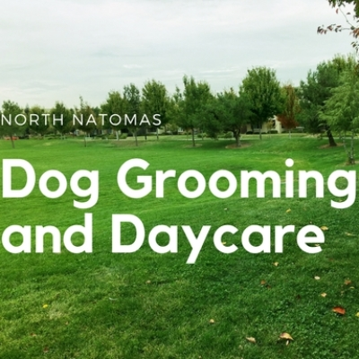 The 10 best dog groomers near me with prices reviews private dog grooming and daycare solutioingenieria Gallery