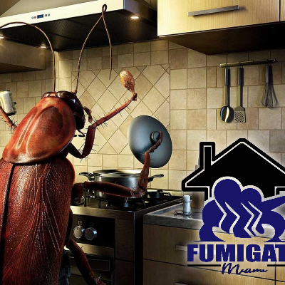 The 10 Best Bed Bug Exterminators Near Me With Free Quotes